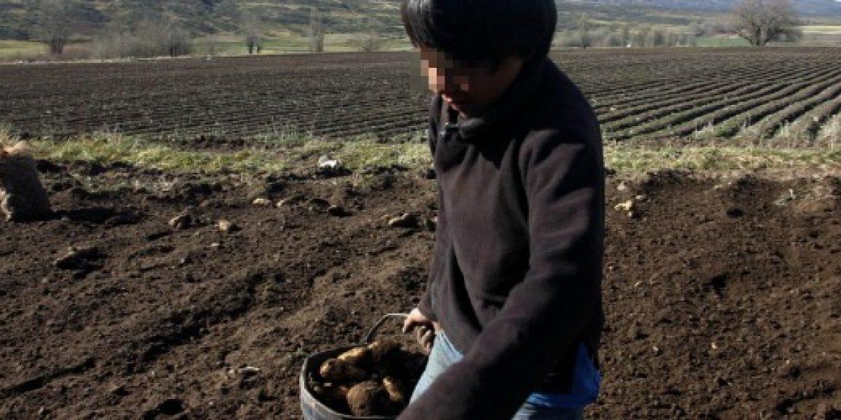 Más de 220 mil menores realizan trabajo infantil en Chile