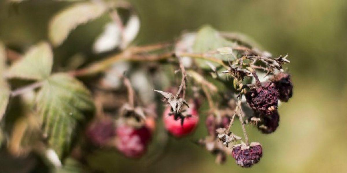 Fedefruta proyecta para 2016 el peor nivel de exportaciones de fruta en 10 años