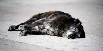 Villa Alemana: formalizan a hombre acusado de matar a perro con un chuzo
