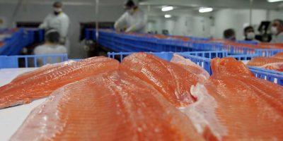 Marea roja: científicos descartan que vertimiento de salmones sea la causa