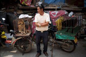 Sin embargo, la demanda de perros ha levantado la polémica. Activistas afirman que es un evento donde la tortura y la violencia contra los animales está presente. Foto:AP. Imagen Por: