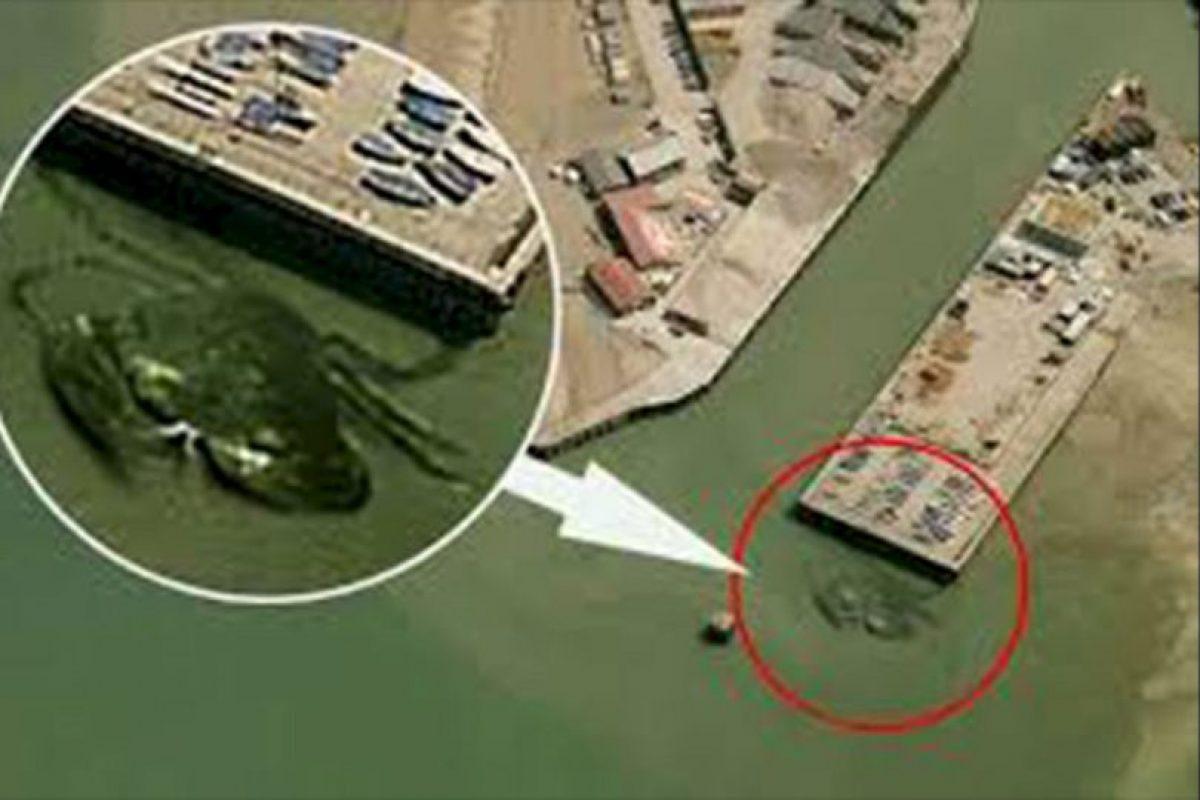 No es el primer animal gigante por Google Maps, este cangrejo gigante también causó revuelo anteriormente. Foto:Reproducción Google Maps. Imagen Por: