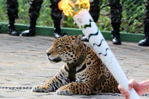 Un jaguar fue sacrificado tras un evento con la antorcha olímpica Foto:AFP. Imagen Por: