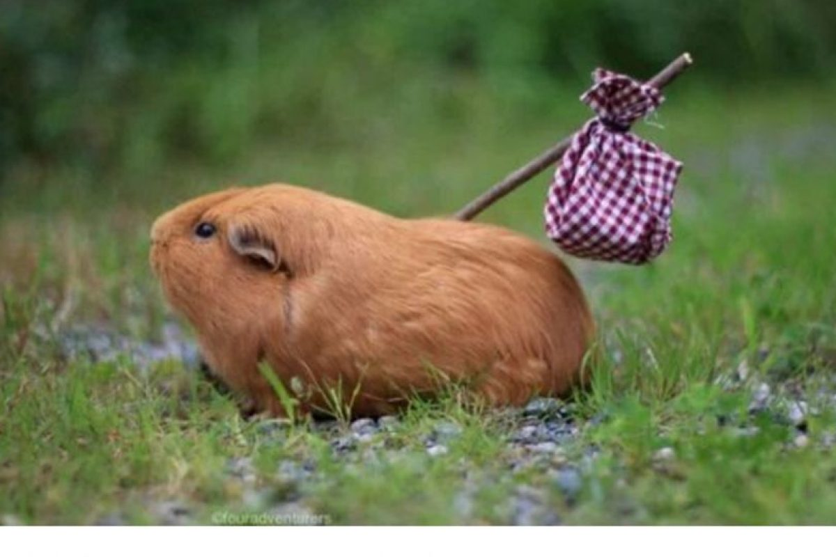 """""""Es tan pobre que su cabello lo abandonó hoy"""" Foto:Twitter.com. Imagen Por:"""