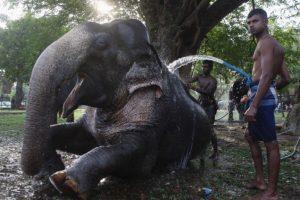 ¿Qué amenaza a los elefantes? Foto:Getty Images. Imagen Por: