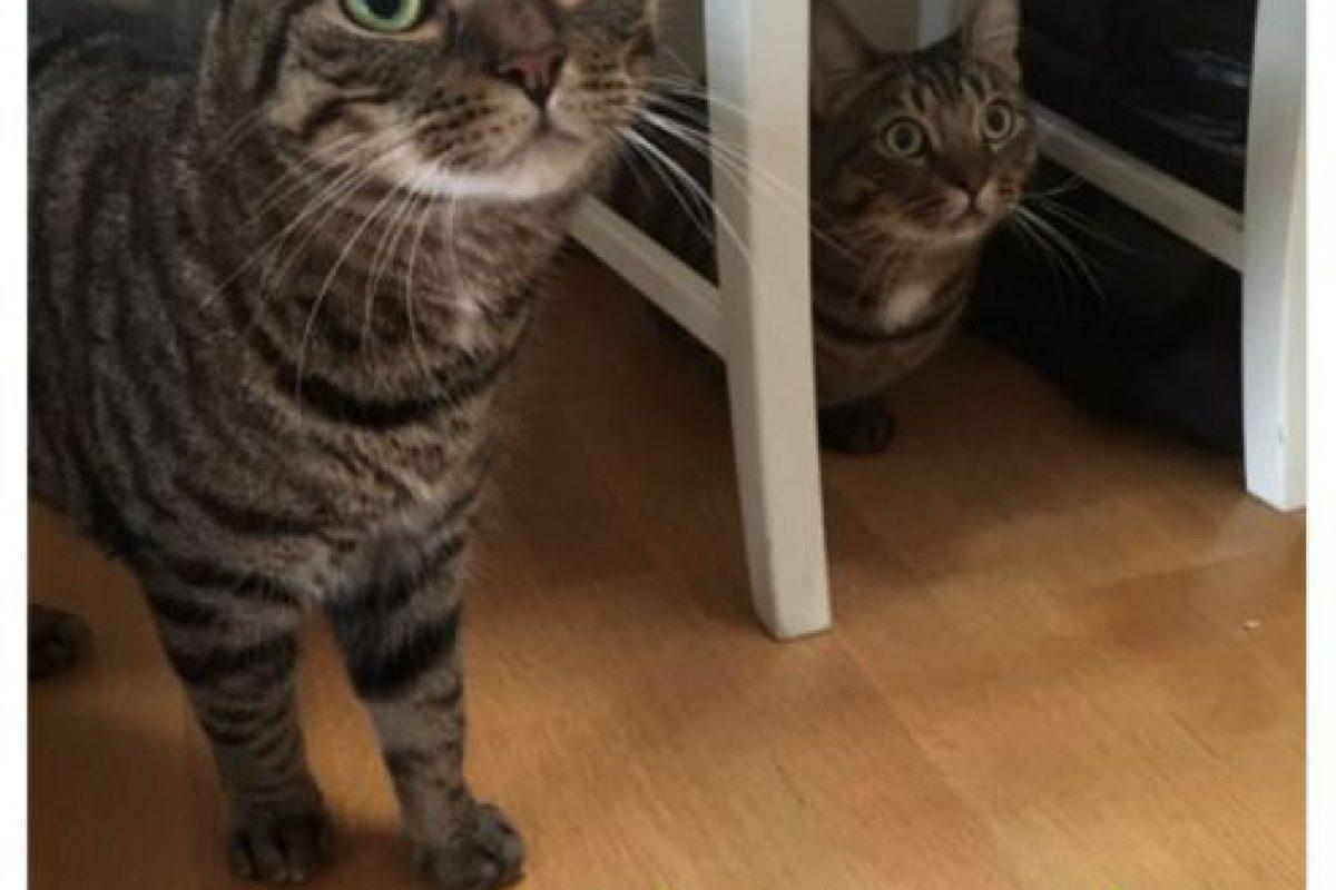 """""""¿Cómo se los digo?"""" Ambos gatitos tienen frente a ellos sus pasaportes de mascotas de la Unión Europea. Foto:Twitter/James Offer. Imagen Por:"""