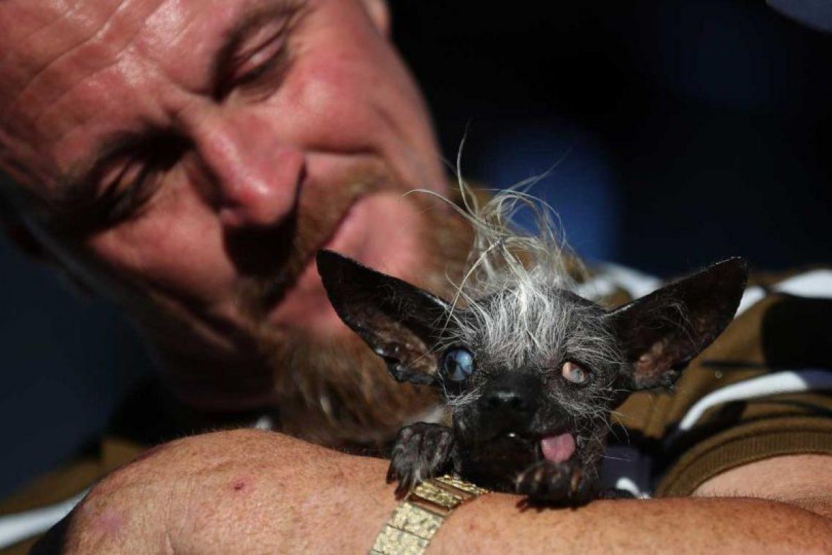 """El ganador fue """"Sweepe Rambo"""", un perro entre chihuahua y crestado chino de 17 años. Foto:Getty Images. Imagen Por:"""