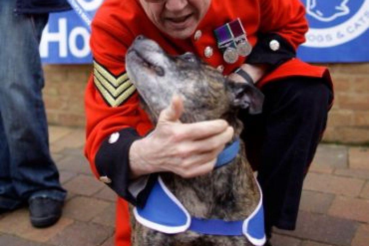 También recomiendan identificar las señales del lenguaje canino Foto:Getty Images. Imagen Por:
