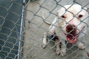 """""""Hay que proteger al perro del niño"""", recomienda el portal """"Sr. Perro"""" Foto:Getty Images. Imagen Por:"""