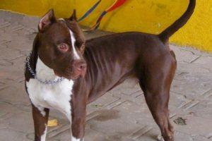 Los perros serán sacrificados Foto:Wikimedia. Imagen Por: