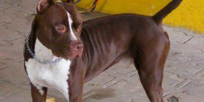 3 cosas que podemos aprender de este trágico ataque de perros