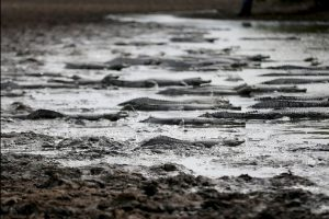 El río Pilcomayo, considerado un santuario para la fauna se está quedando sin agua. Foto:AP. Imagen Por: