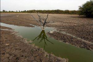 Ahora solo quedan parches de agua donde los animales agonizan y luchan por su vida. Foto:AP. Imagen Por: