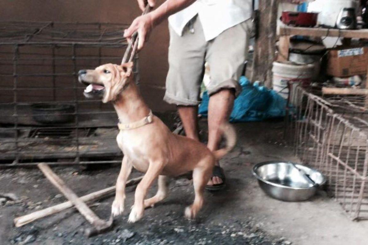 Muchos de ellos son ahorcados en el momento Foto:The Animal Hope & Wellness Foundation. Imagen Por: