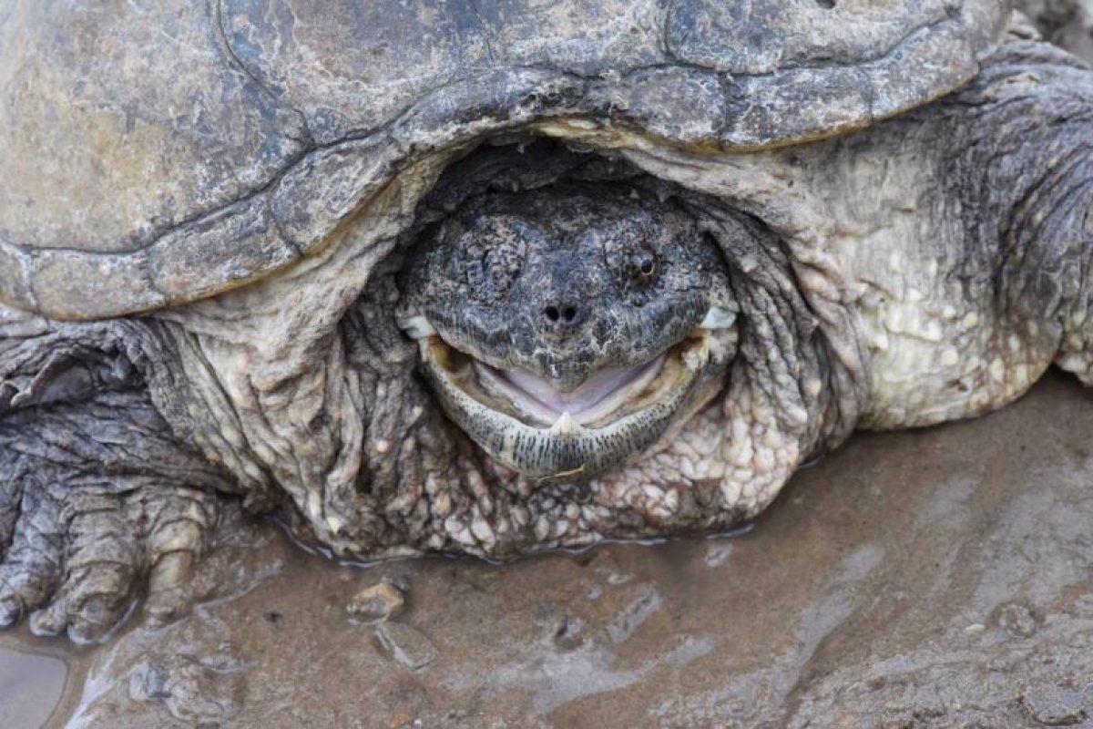Tenía fracturas en el cráneo y perdió la vista de un ojo Foto:Vía Facebook.com/The-Tuttle-Turtle. Imagen Por: