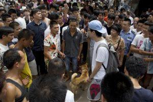 Se estima que cada año se consumen cerca de 10 millones de perros en China, la gran mayoría robados y sacrificados de manera ilegal. Foto:AP. Imagen Por: