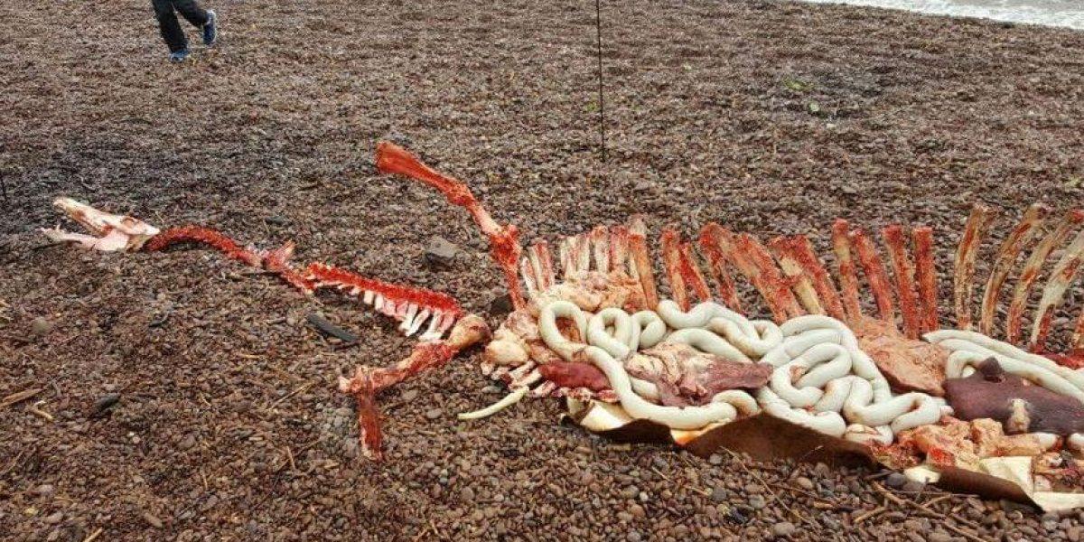 ¿En verdad encontraron los restos del Monstruo del Lago Ness?