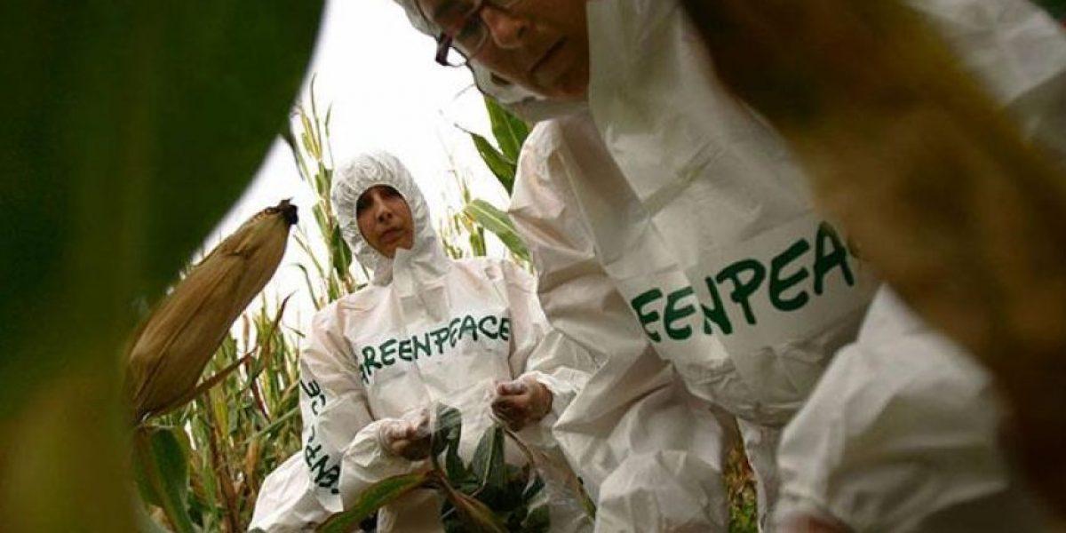 Más de 100 premios Nobel cuestionan a Greenpeace por su campaña contra los transgénicos