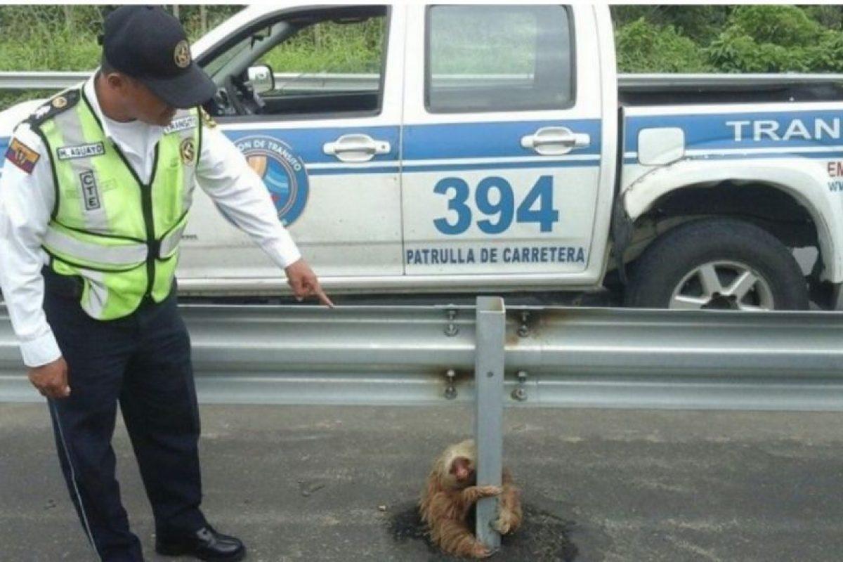 Hasta que llegaron agentes de la Comisión de Tránsito a brindarle auxilio Foto:facebook.com/ctecuador. Imagen Por: