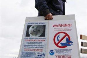 La cría de foca tuvo que ser sacrificada Foto:AP. Imagen Por: