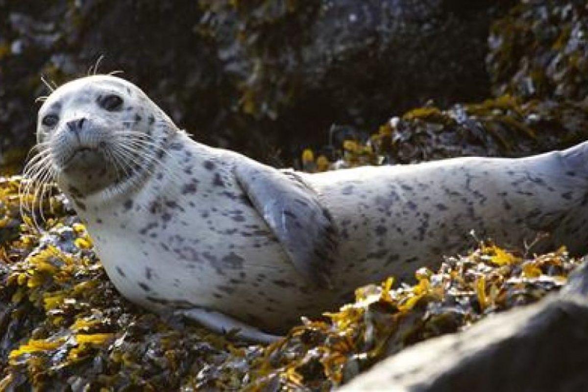 """Una mujer encontró una cría de foca y decidió llevarla a su casa """"para cuidarla"""" Foto:AP. Imagen Por:"""