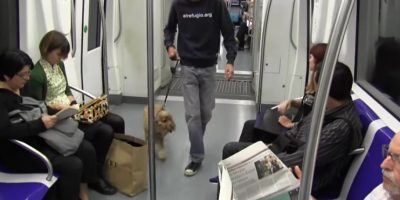 Metro de Madrid autoriza a sus pasajeros a viajar junto a sus perros