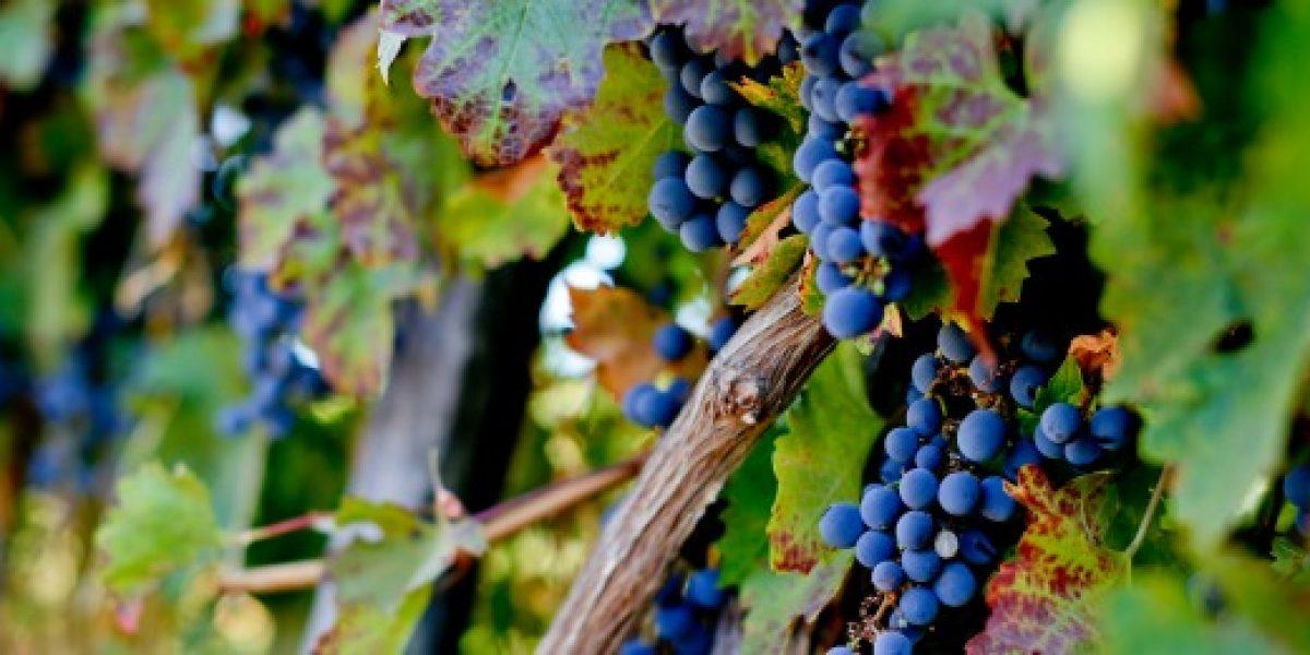 Exportación de vino se dispara en mayo, pero el precio sigue cayendo
