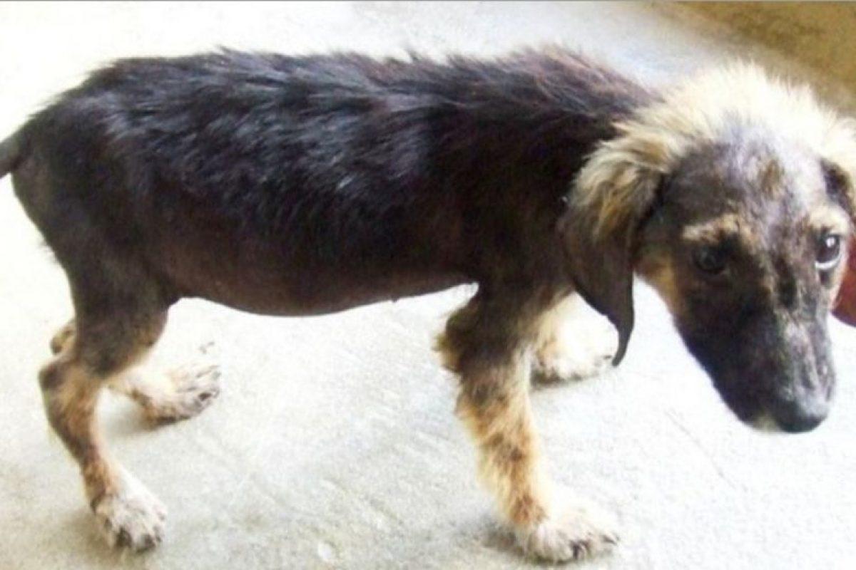 Perritos antes y después de ser rescatados Foto:Reddit. Imagen Por: