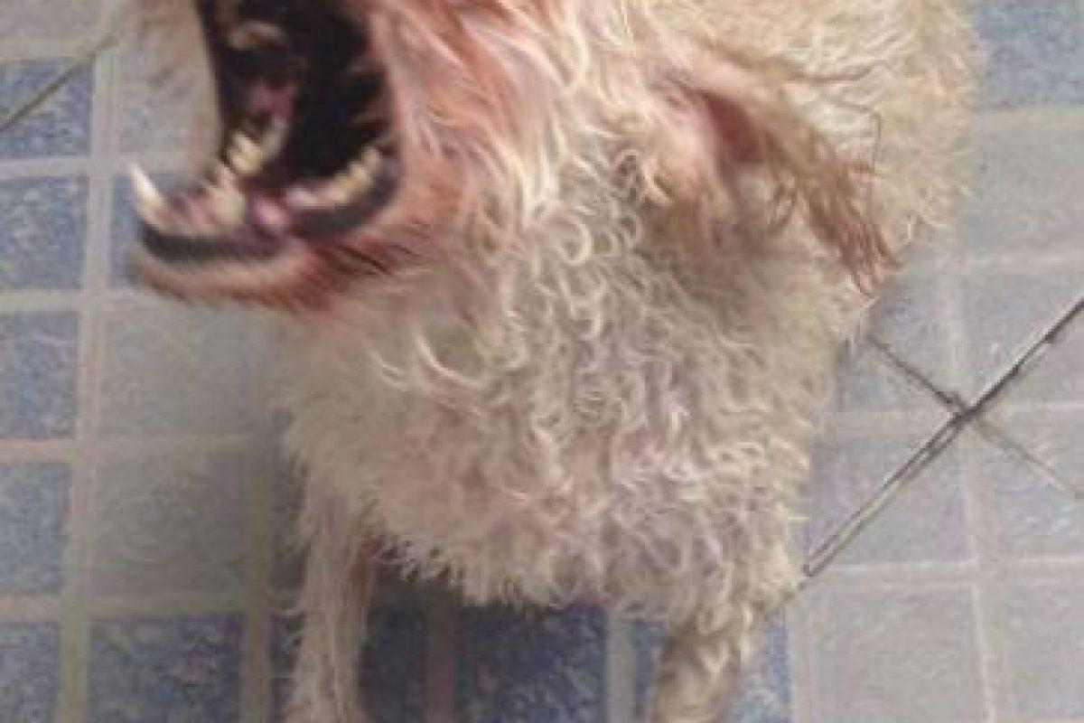 """A esta perrita llamada """"Luki"""" la quieren regalar por juguetona, amigable y social. ;) Foto:Facebook Lucas Duarte. Imagen Por:"""