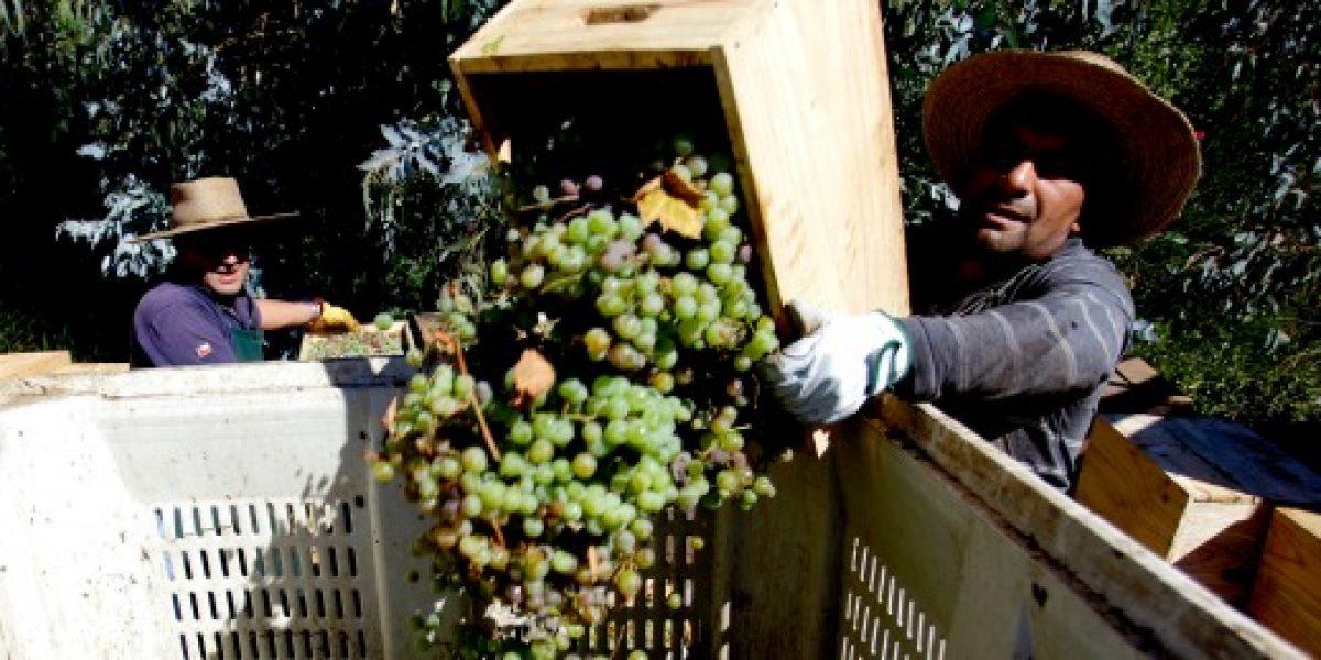 Brexit podría aumentar la venta de vinos chilenos en Reino Unido