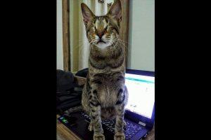 Y, al contrario de lo que se pensaba, no necesitaron de grandes cuidados especiales. Foto:Facebook Three Blind Cats. Imagen Por: