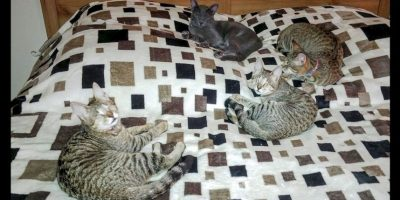 El destino de estos tres gatitos ciegos conmovió al mundo