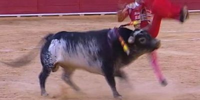 Por esta razón sacrificarán a la casta del toro que corneó a matador español