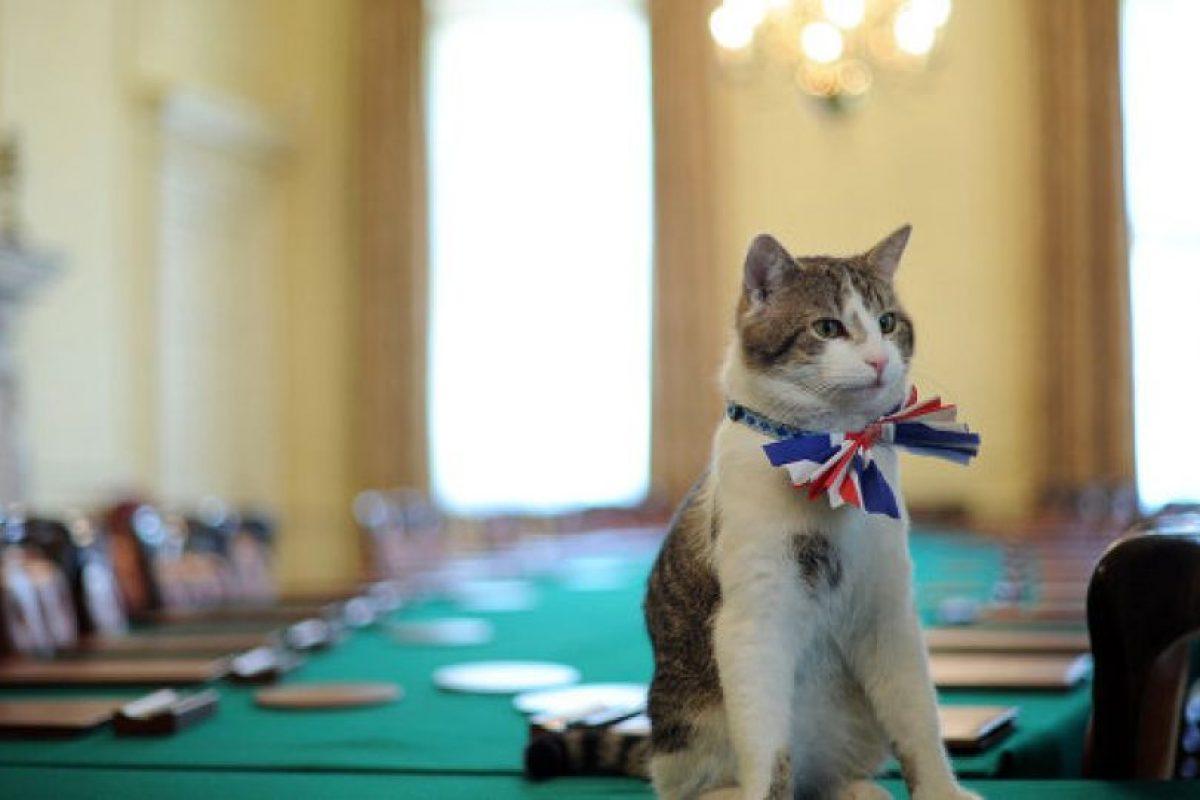 El gato Larry listo para su reunión con David Cameron Foto:AFP. Imagen Por: