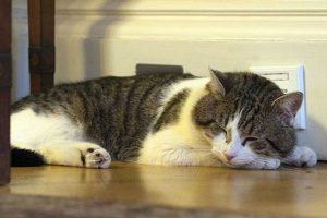 El gato Larry Foto:AFP. Imagen Por: