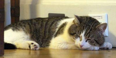 Aunque Cameron se va, el gato Larry se queda en Downing Street