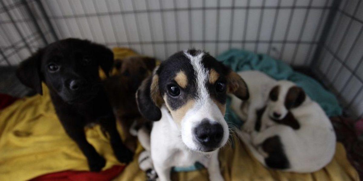 Arica aplicará multas a quienes abandonen a sus mascotas