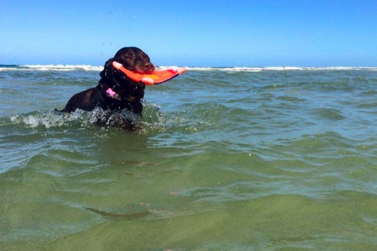 14 meses han pasado y Bella aún sigue atrapando el frisbee que Robert le arroja en cada rincón que visitan. Foto:Facebook Robert Kugler. Imagen Por: