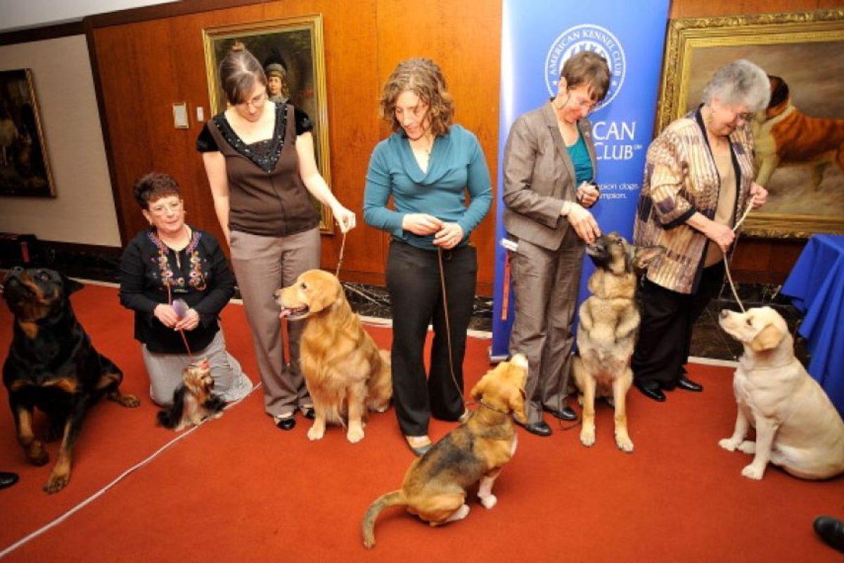 Tampoco se recomienda golpear al perro, ya que es posible irritarlo más Foto:Getty Images. Imagen Por: