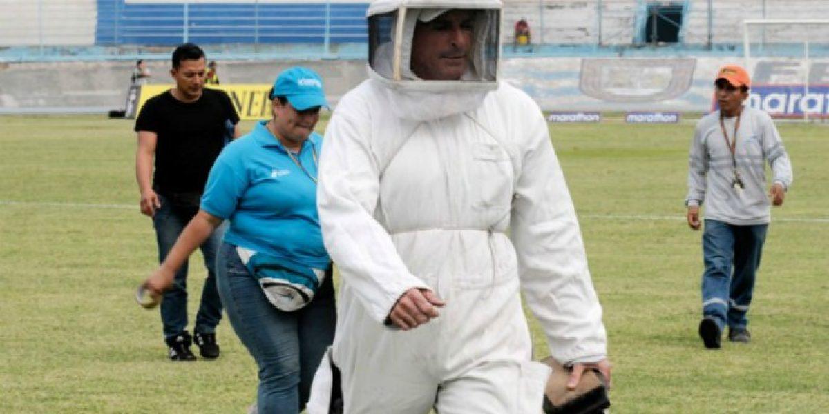 Insólito: Suspenden partido del fútbol de Ecuador por ataque de abejas