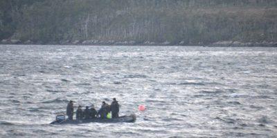 Buzos de la Armada liberaron a ballena de 25 metros atrapada en redes de pesca en Puerto Williams