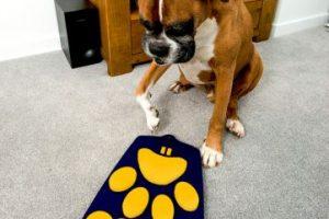 Así luce el control de tv para perros. Foto:Cortesía: Wagg. Imagen Por: