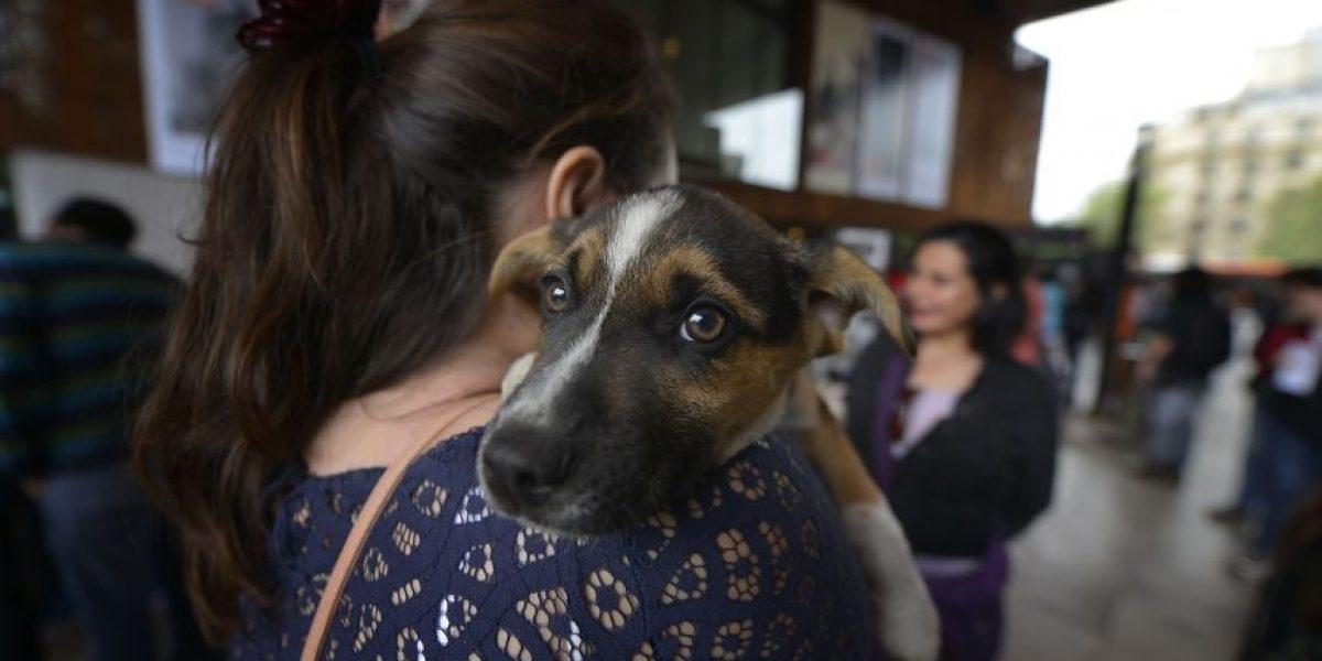 Los detalles de la ordenanza de Providencia que humaniza a las mascotas y castiga los maltratos