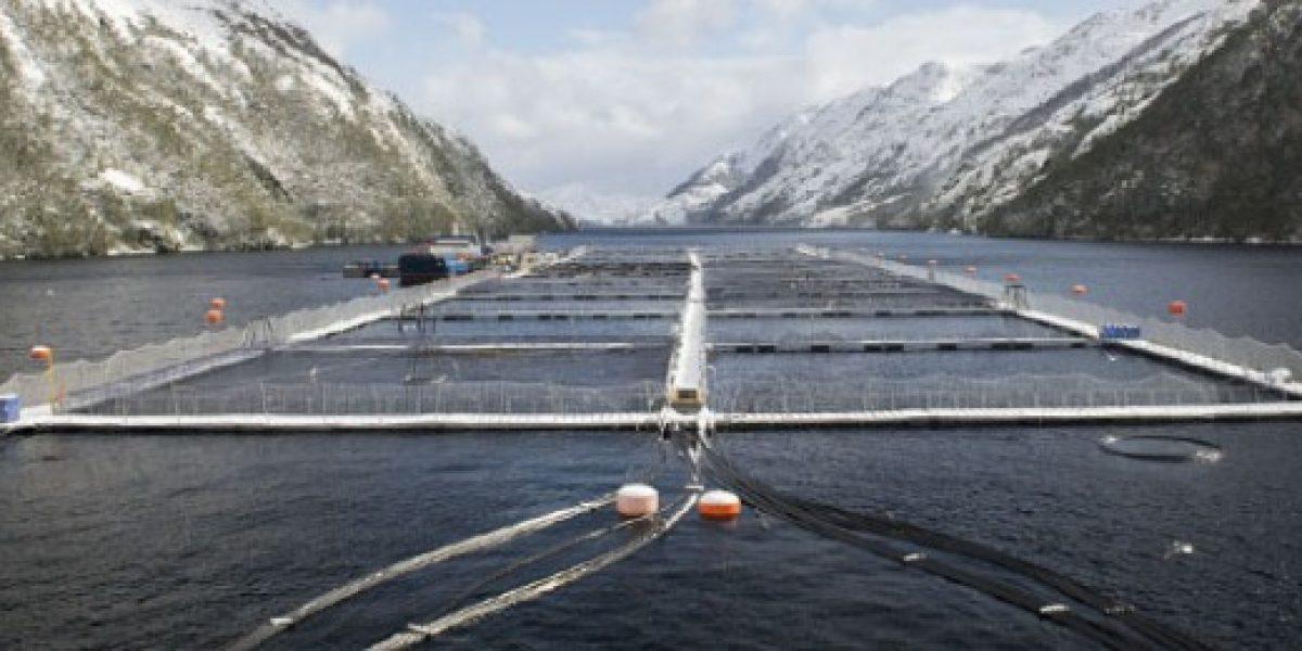 Sernapesca inicia investigación ante escape de 100 mil salmones