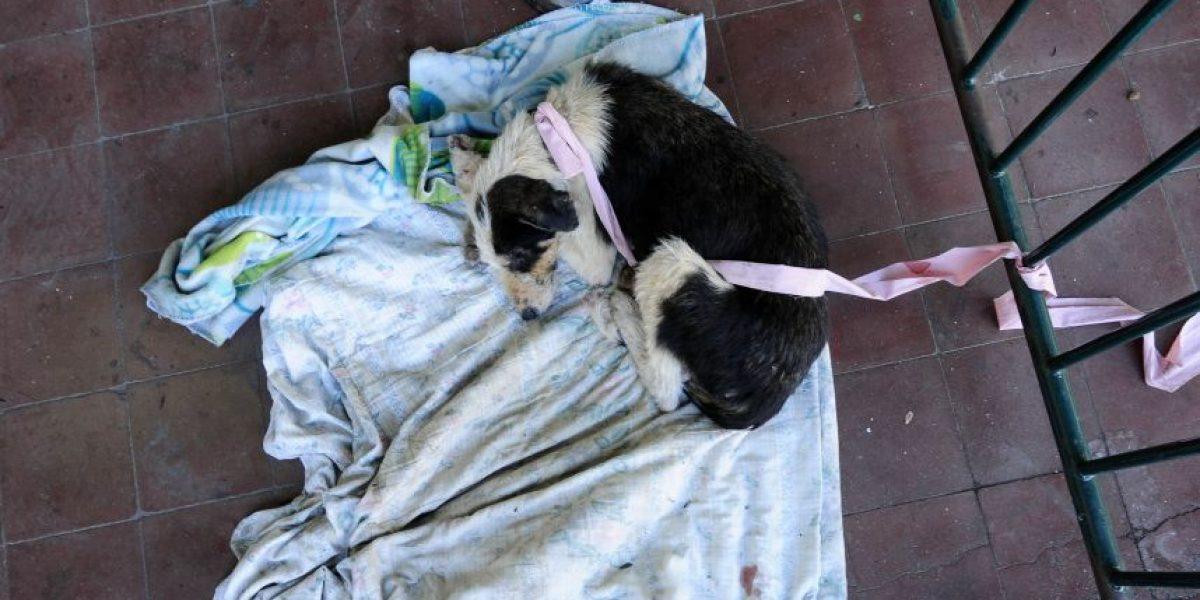 PDI investiga cruel matanza de más de una docena de perros y gatos en Alto Hospicio
