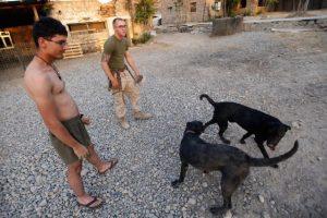 También se difundió el caso de un animal que es baleado Foto:Getty Images. Imagen Por: