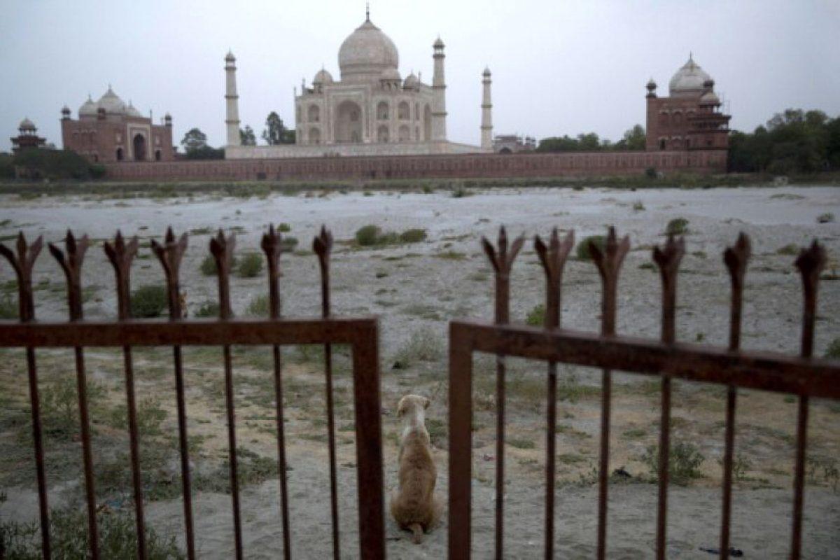Sucedió en la India, donde activistas piden mayores penas contra los abusadores de animales Foto:Getty Images. Imagen Por: