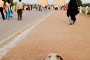 Defensores de los derechos de los animales piden que no queden impunes estos hechos Foto:Getty Images. Imagen Por:
