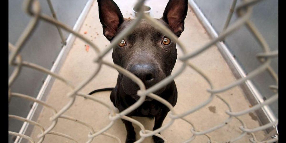 El secreto de Holanda para que los perros callejeros tengan hogar