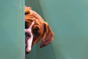 También existen iniciativas para educar a la población sobre el cuidado y el registro de sus mascotas. Foto:Getty Images. Imagen Por: